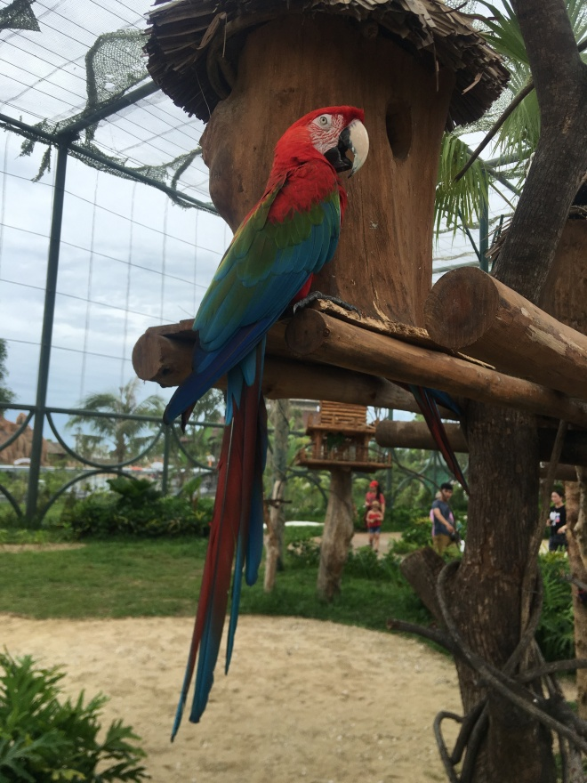 Parrot #2 with SWAG
